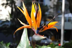 Giallo, viola, arancio_Sydney